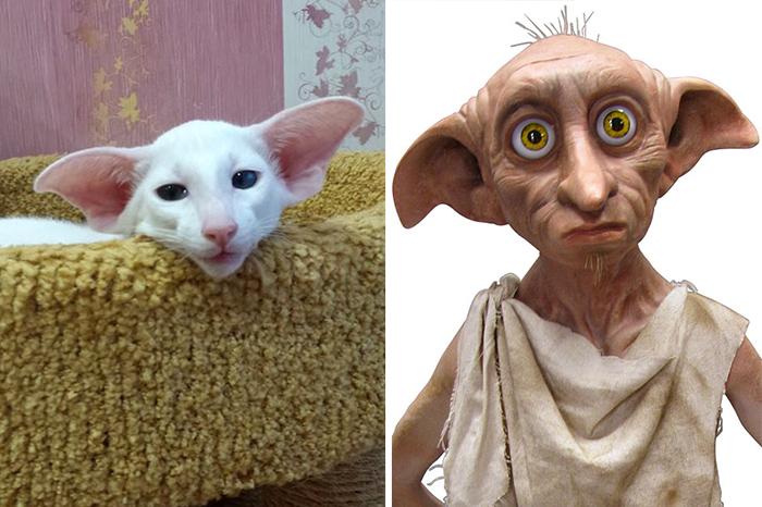Кітті Виглядає Як Доббі