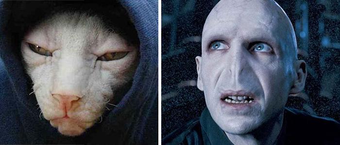 Siamese Cat Looks Like Voldemort