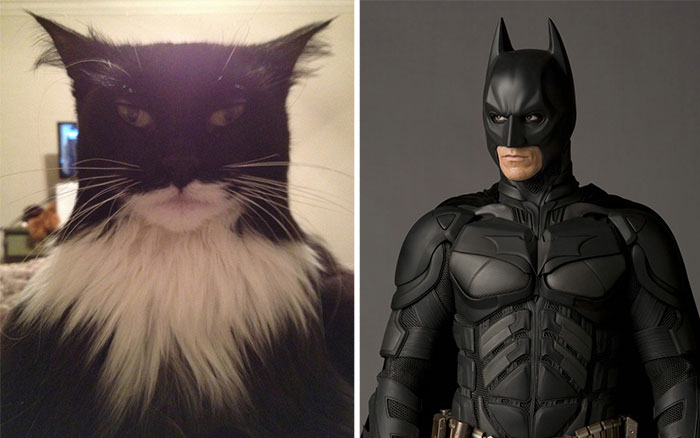 20+ Cats That Look Like Other Things