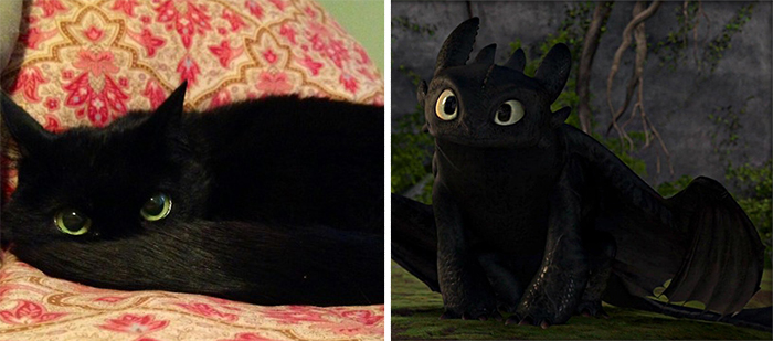 "Black Cat Looks Like Toothless From ""how To Train Your Dragon"""