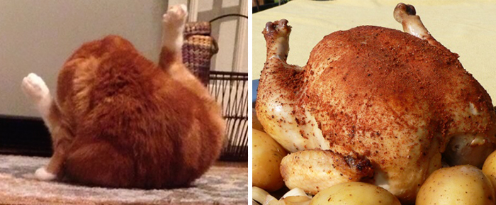 Cat Looks Like A Roasted Chicken