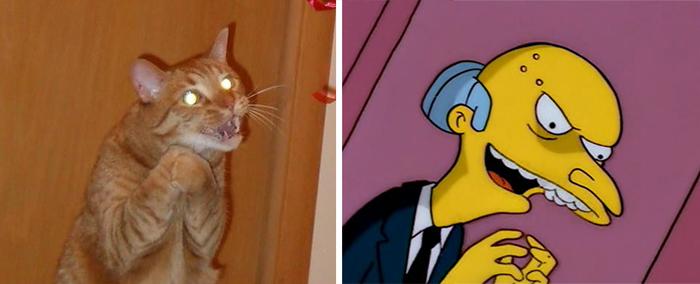Evil Plan Cat Looks Like Mr Burns