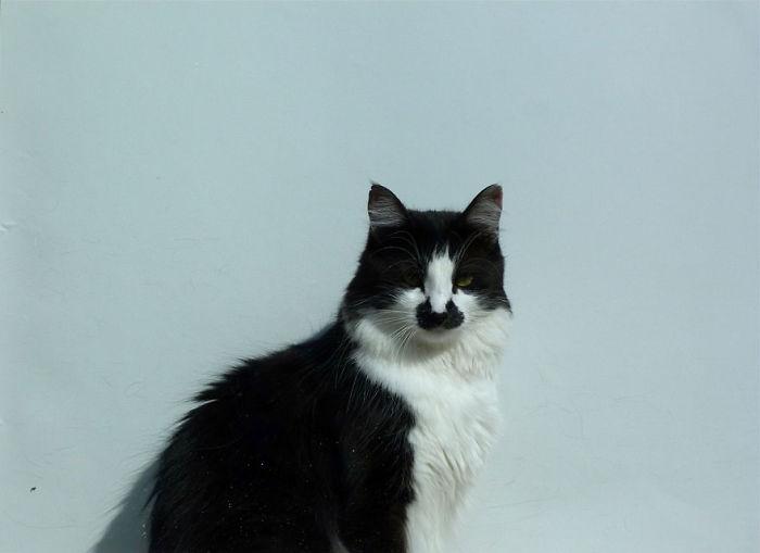 Poirot From Bergamo :)