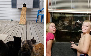 This Dad Built A 'Cataquarium' For Freezing Cats On Thanksgiving