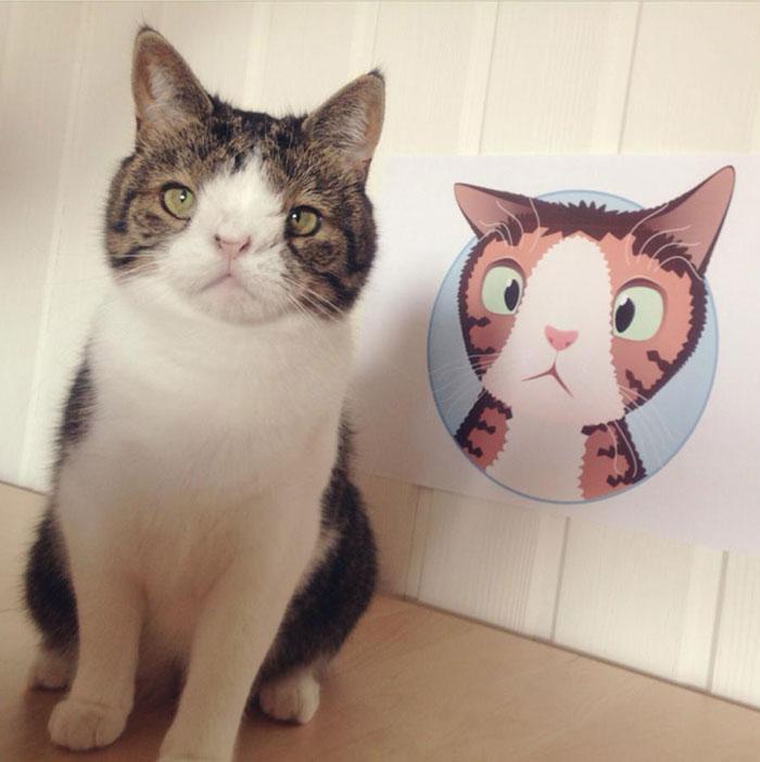 cute-cat-without-nosal-bone-monty-14