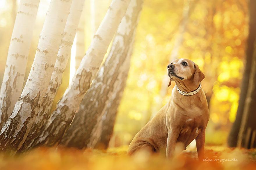 cão-fotografia-alicja-zmyslowska-16