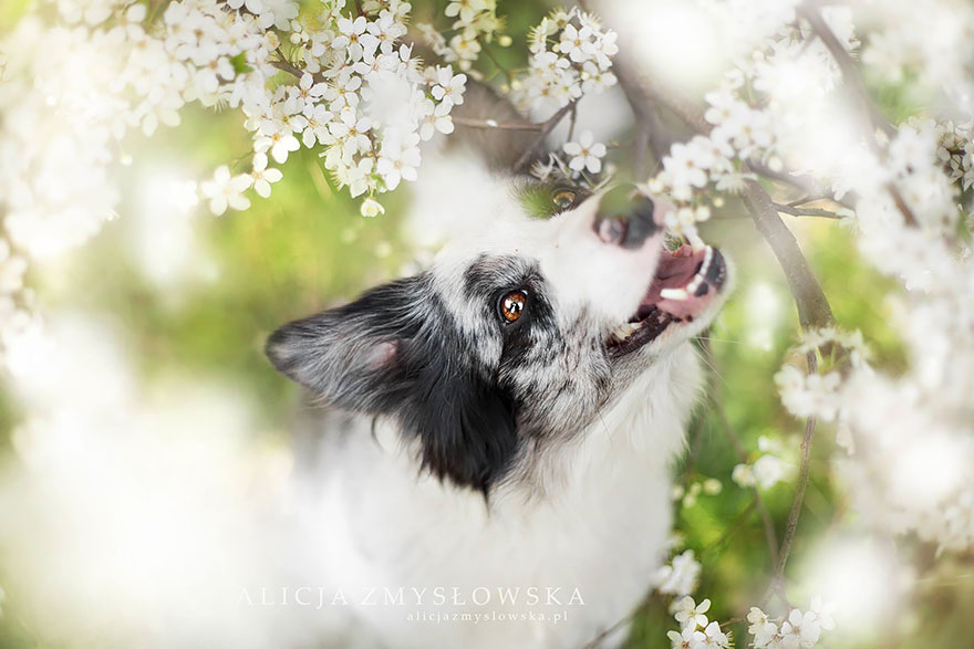 cão-fotografia-alicja-zmyslowska-18