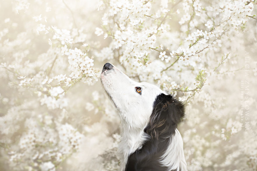 cão-fotografia-alicja-zmyslowska-19