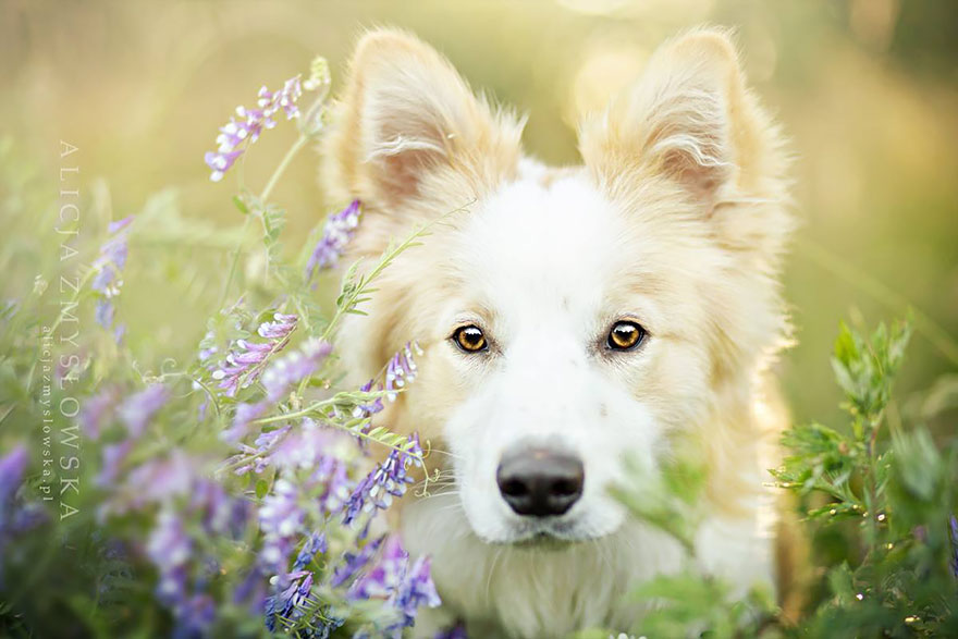 cão-fotografia-alicja-zmyslowska-22