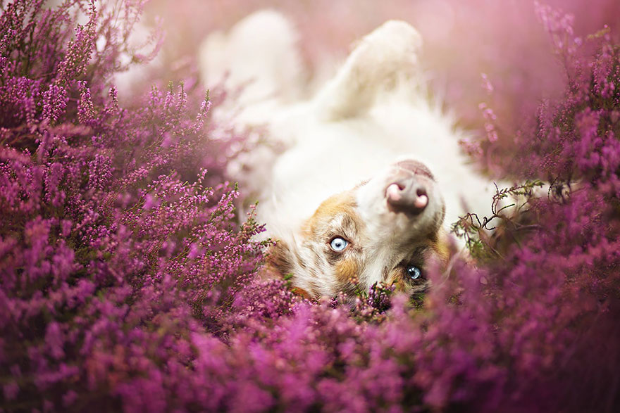 cão-fotografia-alicja-zmyslowska-23