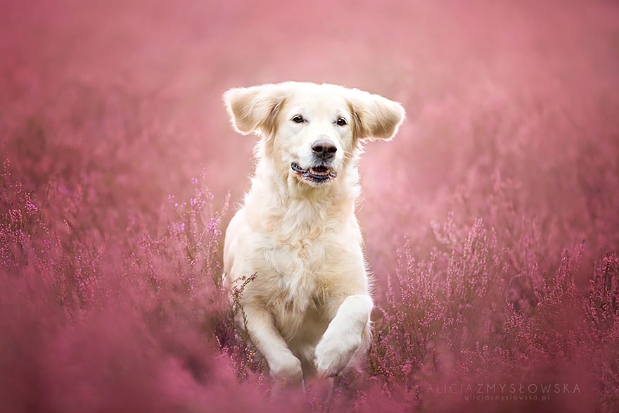 cão-fotografia-alicja-zmyslowska-24