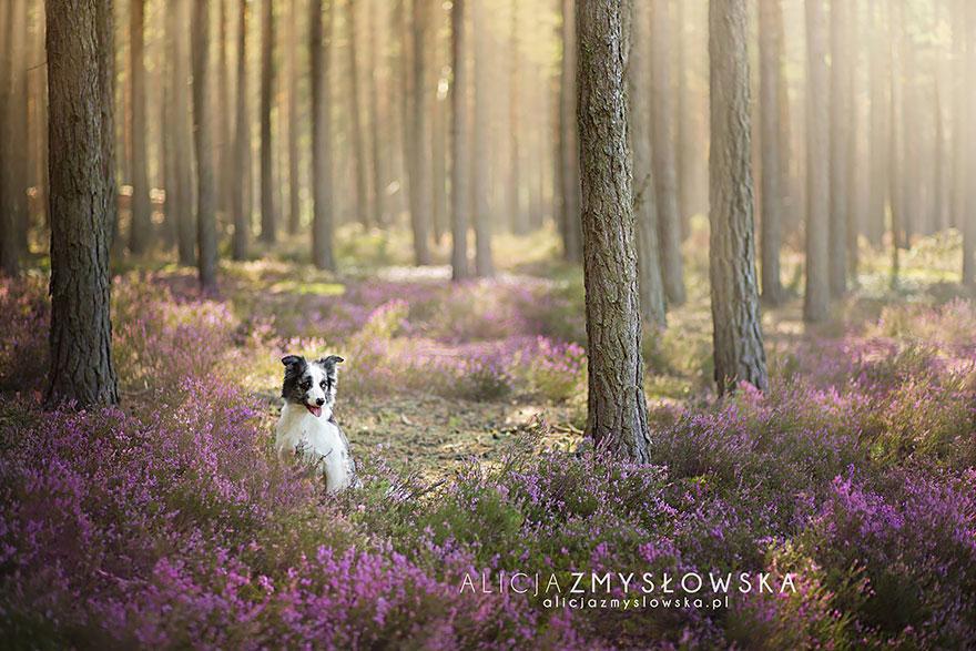 cão-fotografia-alicja-zmyslowska-25