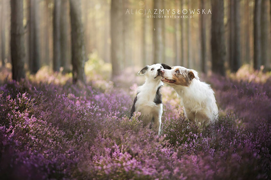 cão-fotografia-alicja-zmyslowska-26
