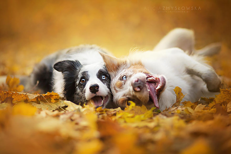 cão-fotografia-alicja-zmyslowska-27