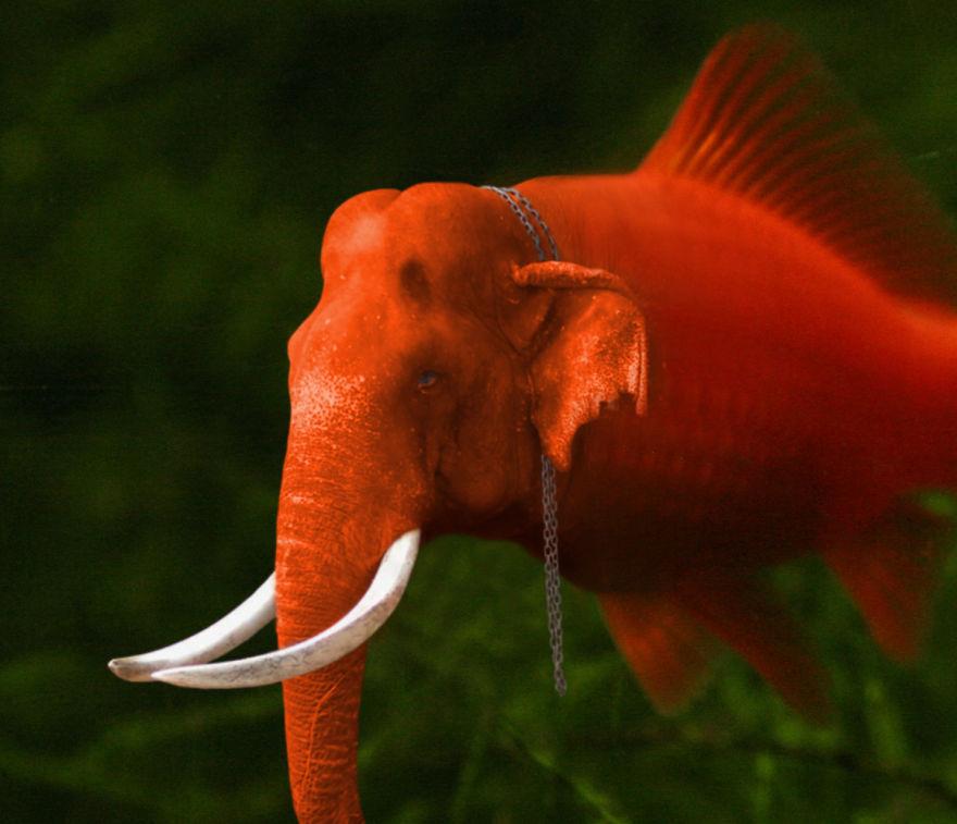 Elefish