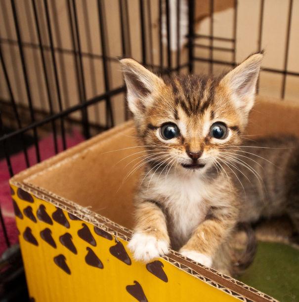 Eeyore...the Smallest Kitty!