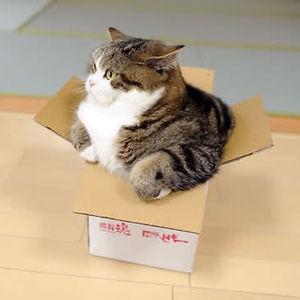 Maru, Master Of Boxes