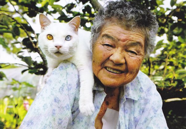 Fukumaru, The Friendliest Cat With Heterochromia