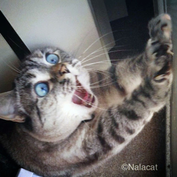 Nala, The Shocked Cat