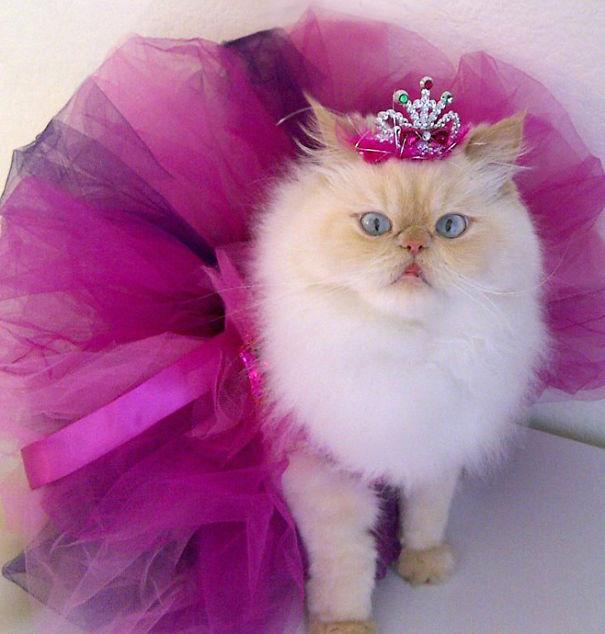 Luna, The Fashion Diva