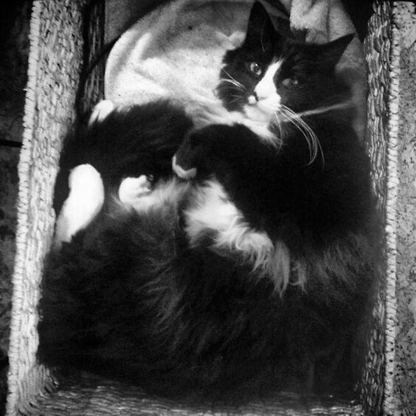 Henri, The Philosopher Chat Noir