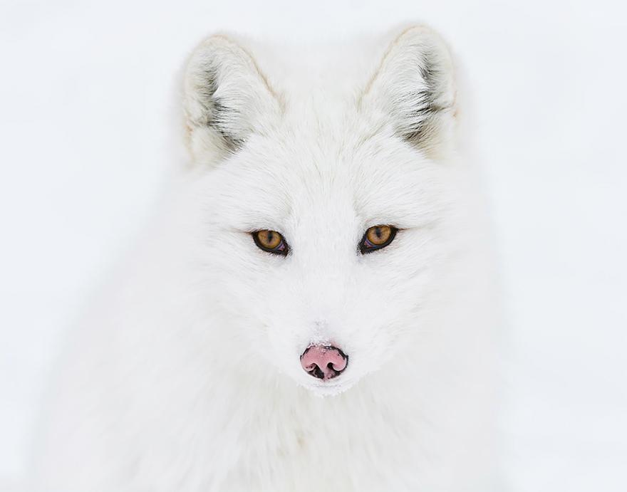 fox-espécies-fotografia-1-1