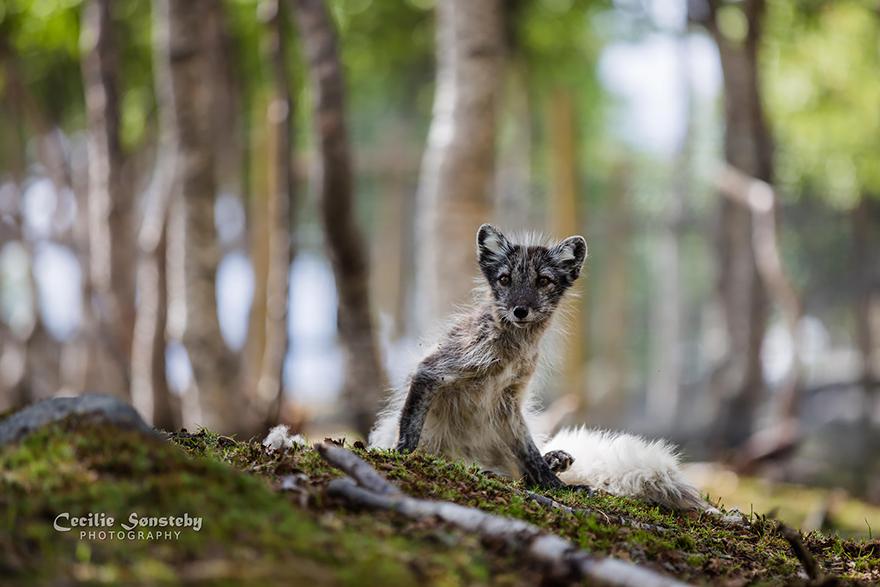 fox-species-photography-1-4