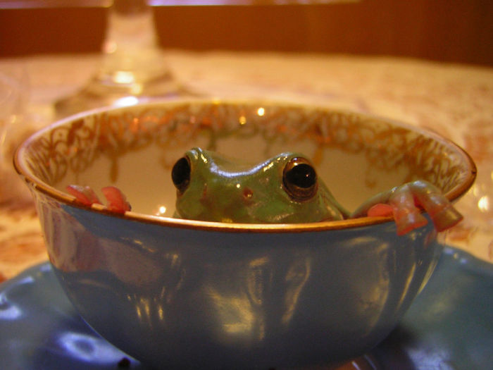 ===Dentro de una taza=== Frog_in_a_cup_again_by_roxanedragonheart-d5kn9te__700