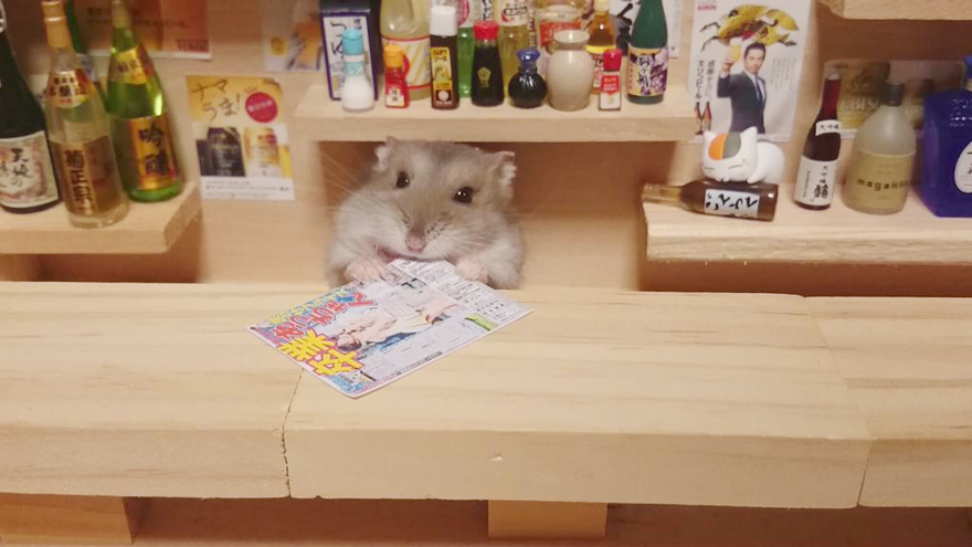 http://static.boredpanda.com/blog/wp-content/uploads/2014/11/hamster-bartender-miniature-bar-kawanabesatou-12.jpg