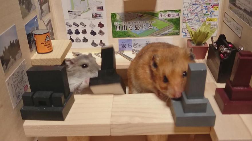 http://static.boredpanda.com/blog/wp-content/uploads/2014/11/hamster-bartender-miniature-bar-kawanabesatou-16.jpg