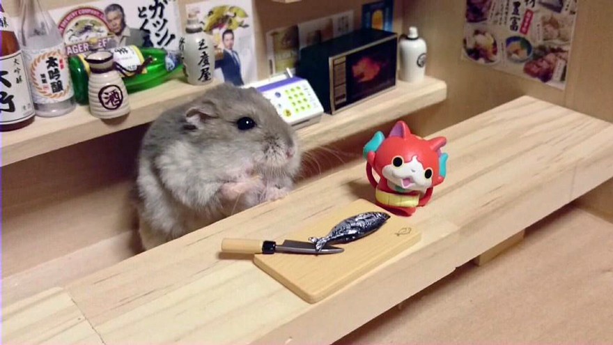 http://static.boredpanda.com/blog/wp-content/uploads/2014/11/hamster-bartender-miniature-bar-kawanabesatou-19.jpg