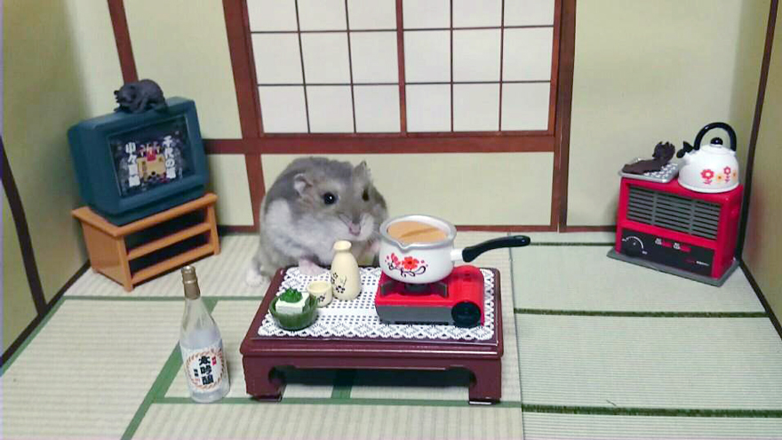 http://static.boredpanda.com/blog/wp-content/uploads/2014/11/hamster-bartender-miniature-bar-kawanabesatou-20.jpg