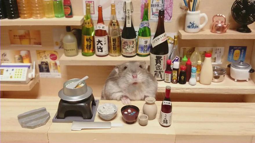 http://static.boredpanda.com/blog/wp-content/uploads/2014/11/hamster-bartender-miniature-bar-kawanabesatou-21.jpg