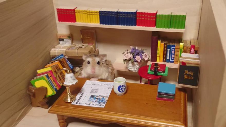 http://static.boredpanda.com/blog/wp-content/uploads/2014/11/hamster-bartender-miniature-bar-kawanabesatou-9.jpg