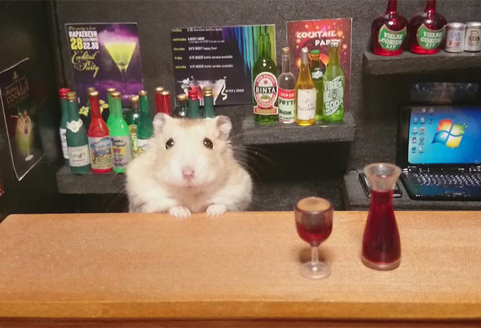 Little Hamster Bartenders Serving Tiny Food and Drinks