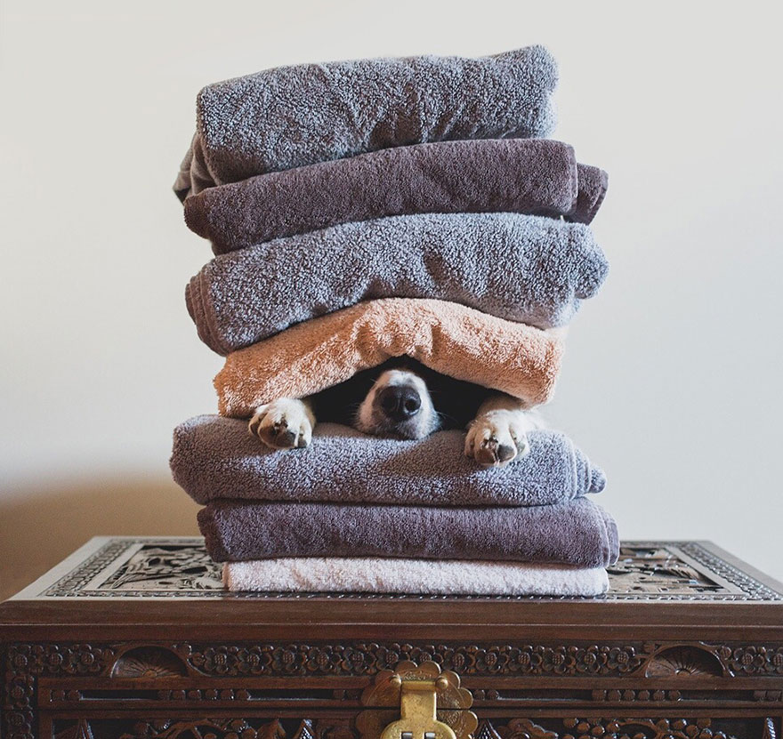 hide-and-seek-dog-photography-finding-momo-andrew-knapp-35