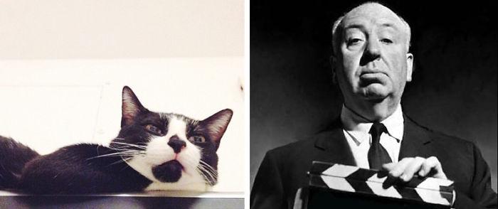 Hitchcock Cat - Hitchcoco