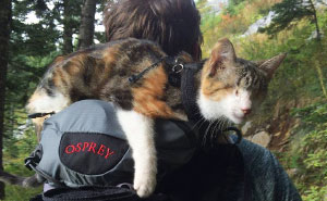 Meet Honey Bee, Our Rescued Blind Cat Who Loves Hiking With Us