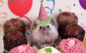 The Adventures Of Humphrey J Hedgehog