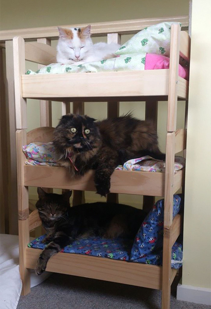 Japanese cat owners turn ikea doll beds into adorable cat - Sofas para gatos ...