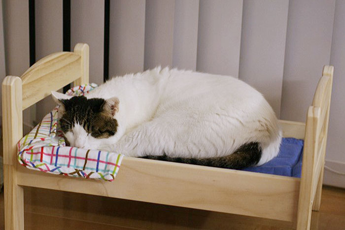 Japanese cat owners turn ikea doll beds into adorable cat for Chair that turns into a bed ikea