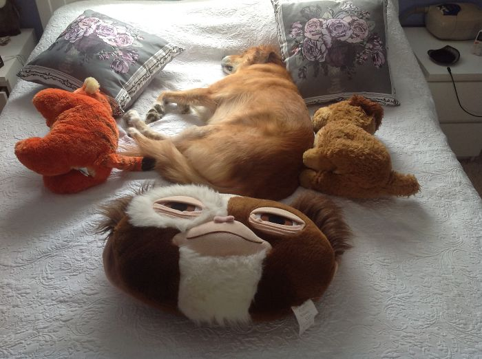 Cuddly Toys. And Charlie.