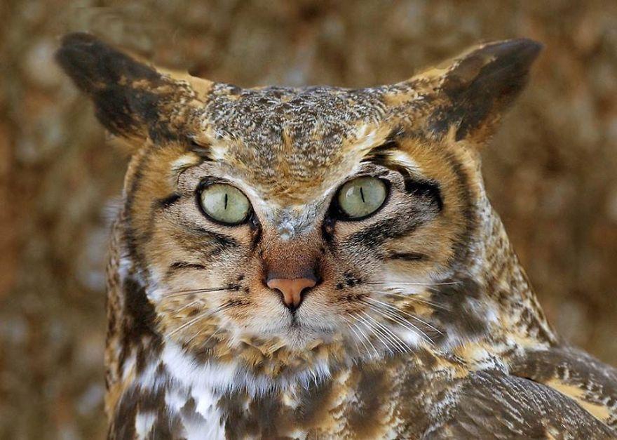 Catowl (luk Swerts)