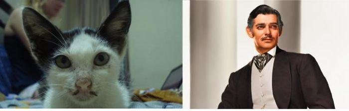 Kitty And Clark Gable