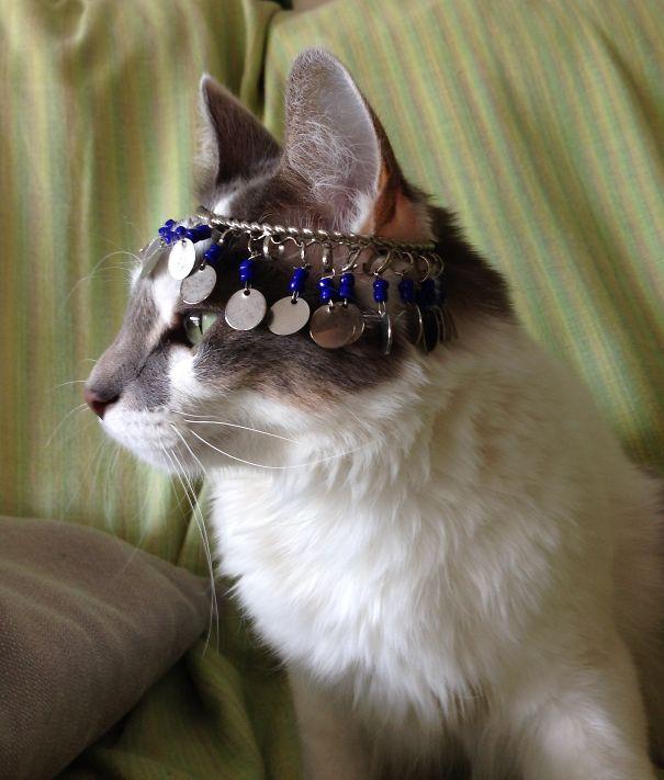 Tika The Evil Cat
