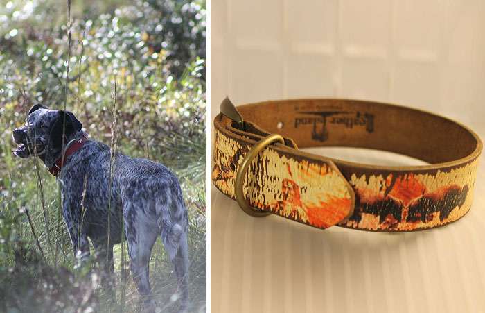 Lucky Dog Upcycle: My Rescue Dog Inspired Me To Create Dog Collars Out Of Old Belts