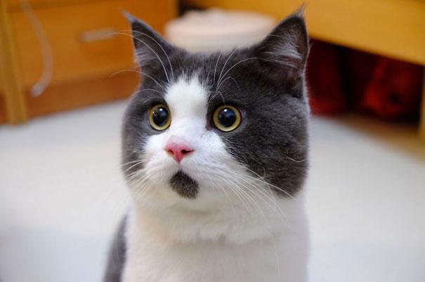 Banye, The Omg Cat