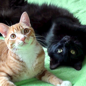 Cole And Marmalade: Two Rescued Kitties That Became Youtube Celebrities