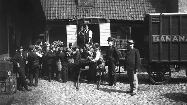 Norway Receive Their First Ever Shipment Of Bananas,1905
