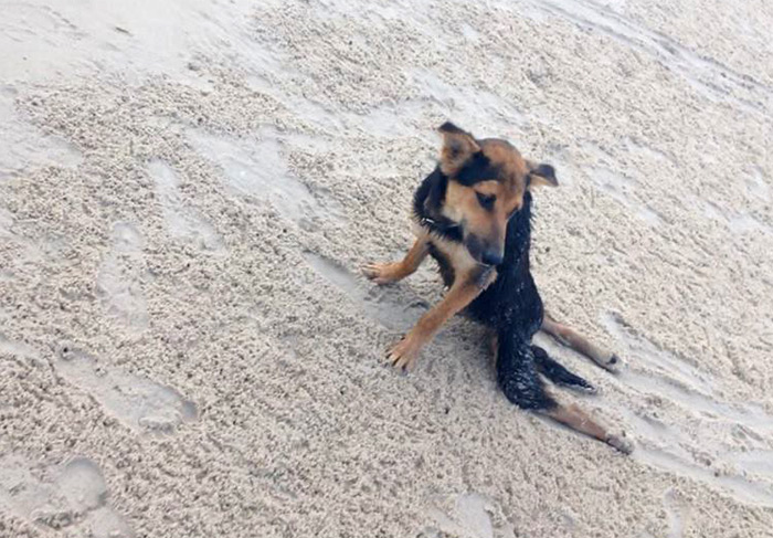 The Heartwarming Story Of Leo, A Paralyzed Puppy Found On A Beach In Thailand